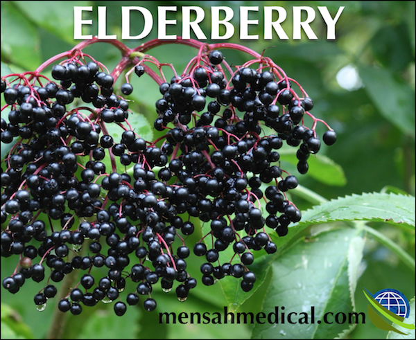 Elderberry Benefits and Dangers for Patients