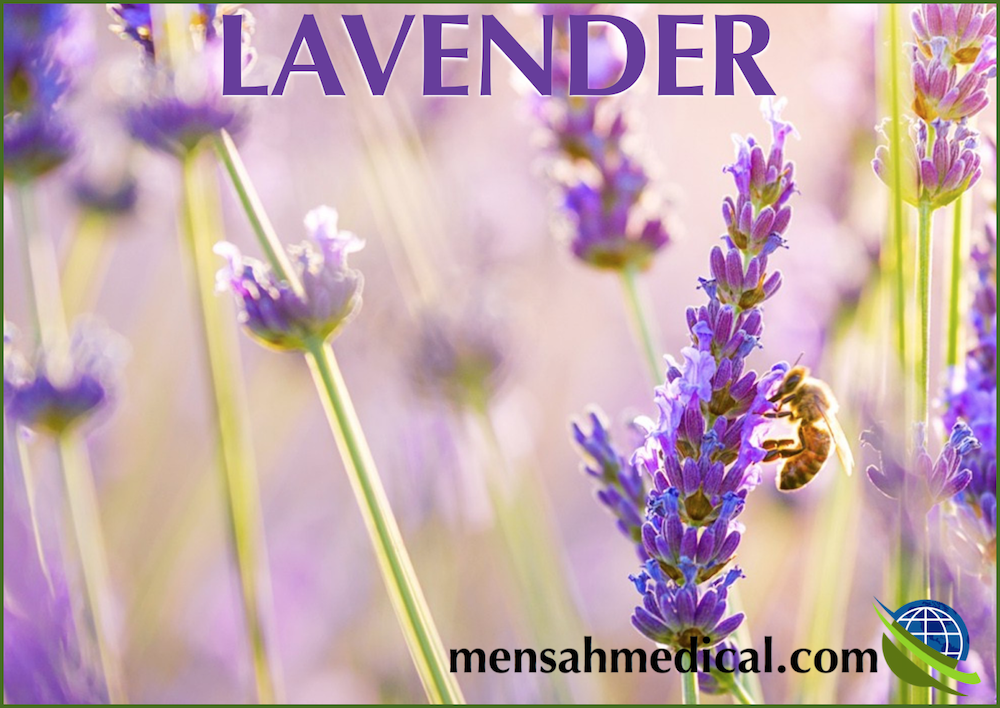 Lavender Oil for Allergies and Anxiety: Is it Friend or Foe?